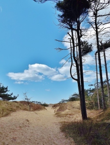 formby sefton coast beach merseyside pine trees free photos images beach sea (50)